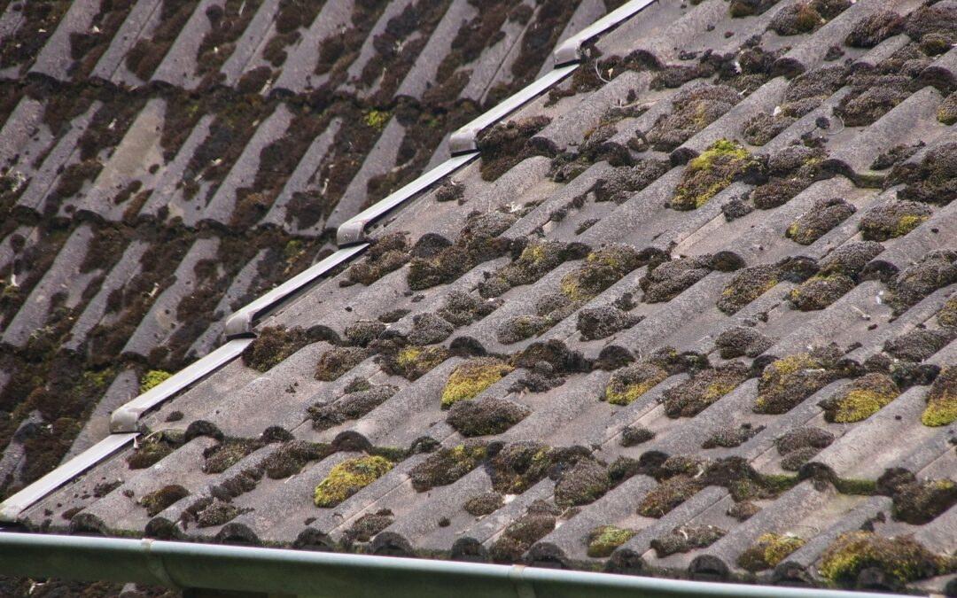 moss and debris covering tiled roof